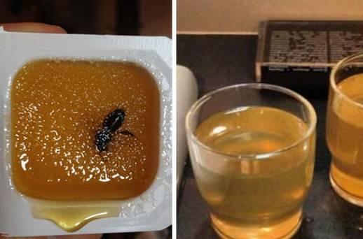 Bee in Sochi Winter Olympic